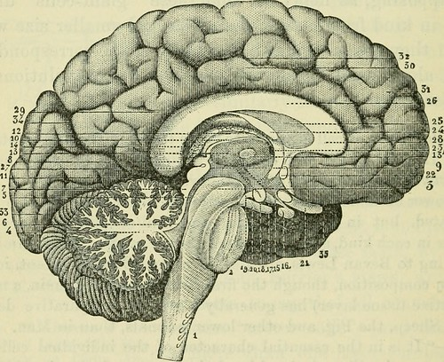 The only way to study the brain is by using the brain. . .